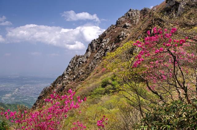 画像: 斜面に咲くツツジ(イメージ)