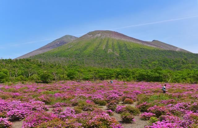 画像: ミヤマキリシマと霧島山(イメージ)