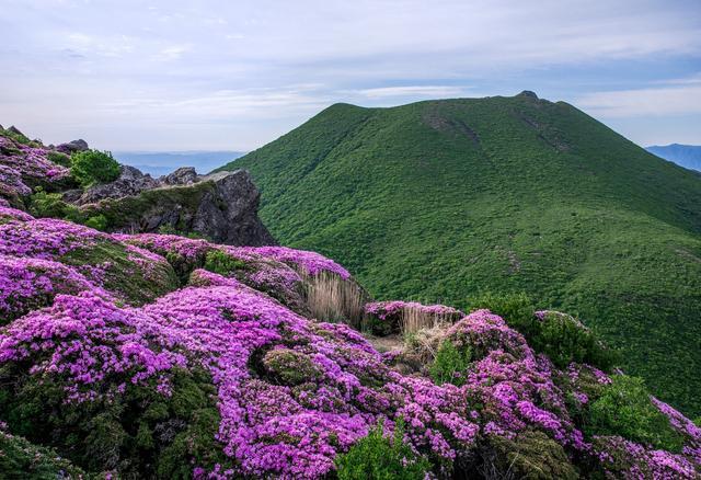 画像: ミヤマキリシマと新緑の山(イメージ)
