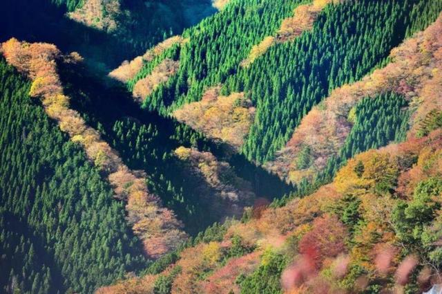 画像: 『大型バスでは行けない絶景 行者還林道から見る「ナメゴ谷」と紀伊山地の山から見渡せる天空の郷「果無集落』【小倉・新門司港】|クラブツーリズム