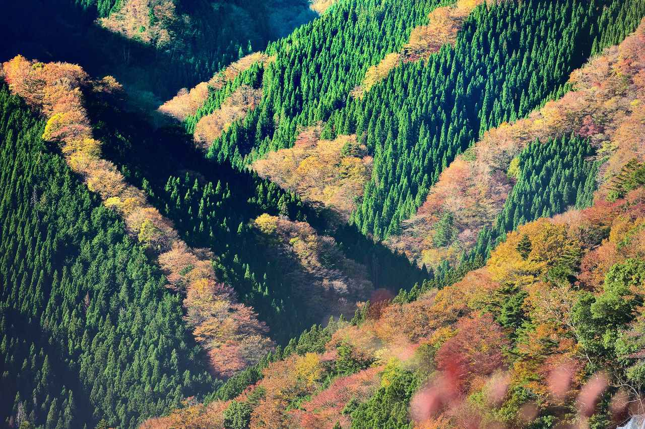画像: 紅葉のナメゴ谷(イメージ)