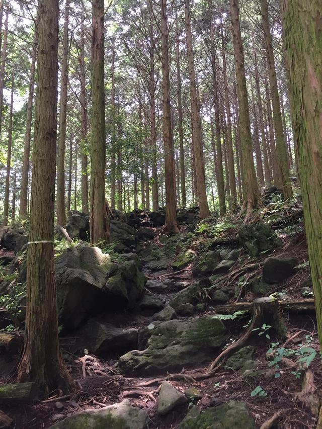 画像: 登山道も段々と傾斜を増してきます(イメージ)