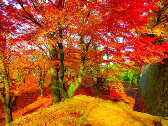 画像: 岡城址の紅葉(イメージ)
