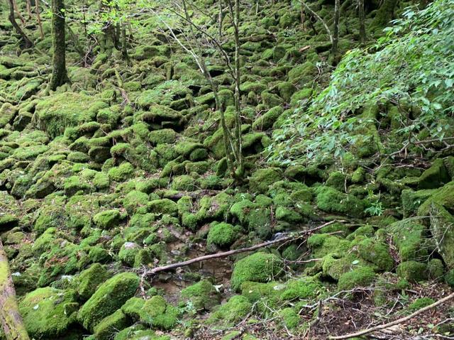 画像7: 九州百名山・「白岩山」と認定ガイド 同行でないと入山できない「津野岳」 2日間