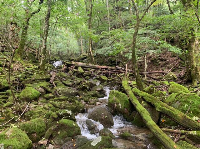 画像4: 九州百名山・「白岩山」と認定ガイド 同行でないと入山できない「津野岳」 2日間