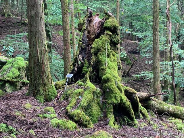 画像6: 九州百名山・「白岩山」と認定ガイド 同行でないと入山できない「津野岳」 2日間