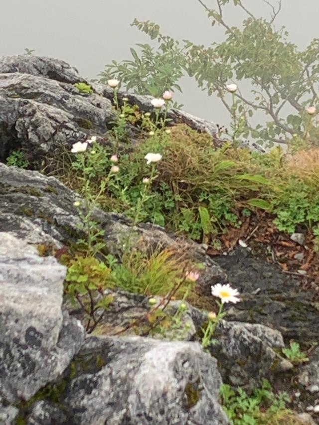 画像: 【旅あそび/九州発テーマ あるく・カルチャー】 九州百名山・白岩山と個人では入山不可の津野岳に行ってまいりました!