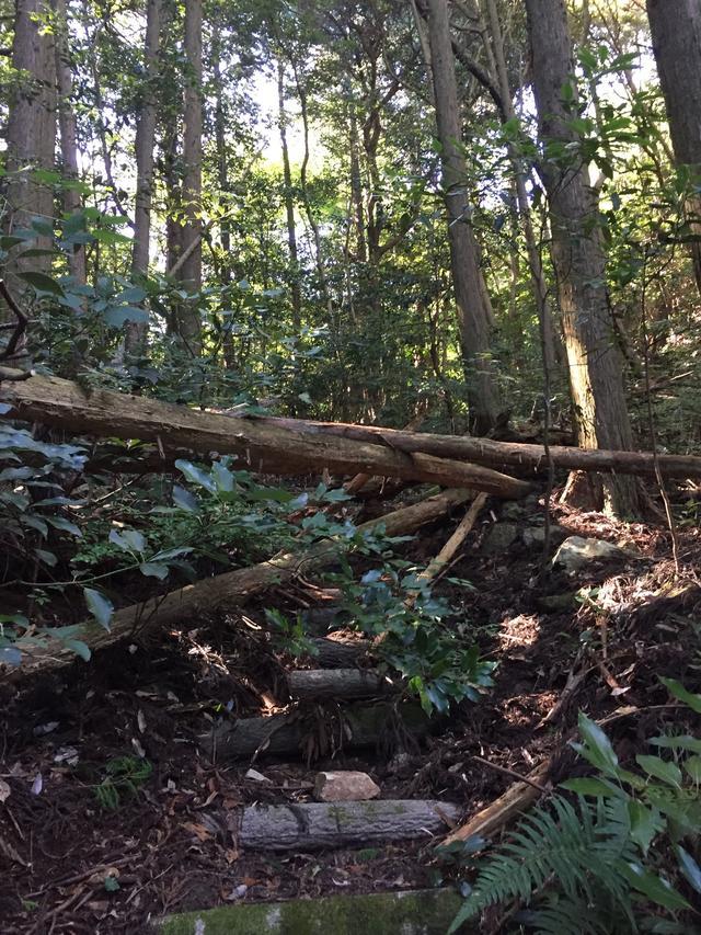 画像: 登山道を塞ぐ倒木。写真手前から簡単に迂回できます。(イメージ)