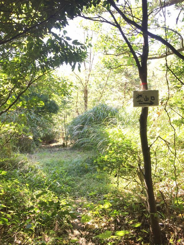 画像: 尾根に出るところ。ここから右に曲がって、最後の急登がはじまります。(イメージ)