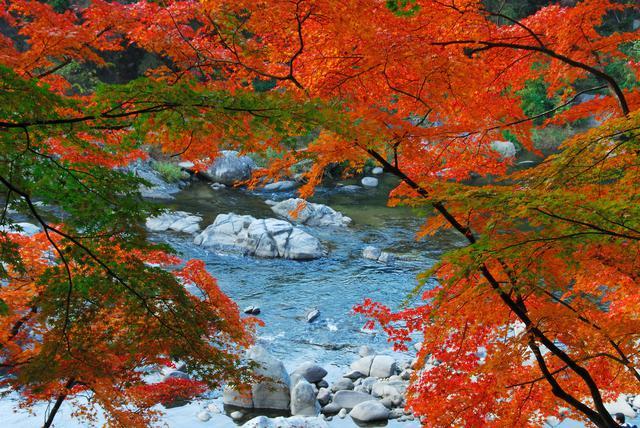 画像: 香嵐渓(紅葉の見頃は例年11月中旬~下旬)