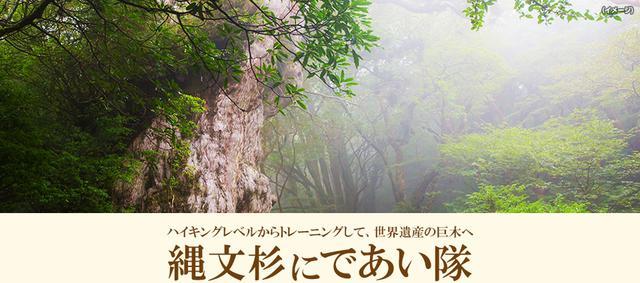 画像: 【九州発】縄文杉にであい隊ツアー・旅行|あるく国内|クラブツーリズム