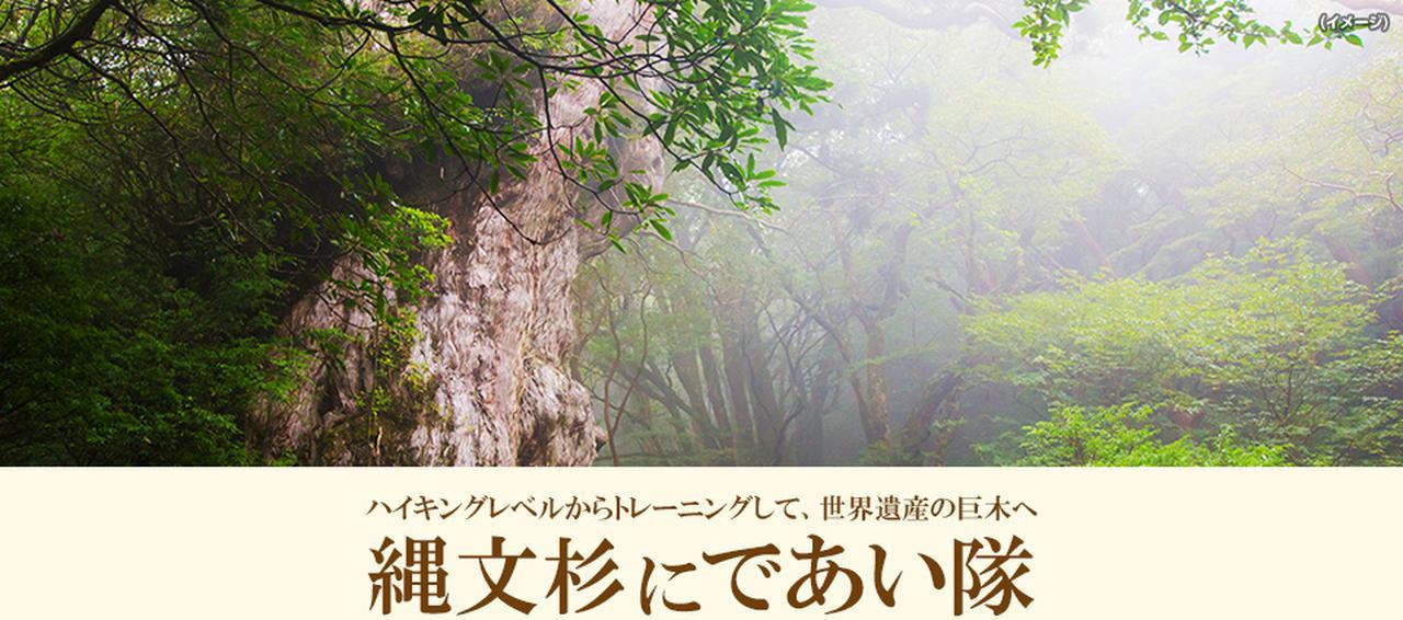画像: 【九州発】縄文杉にであい隊ツアー・旅行 あるく国内 クラブツーリズム