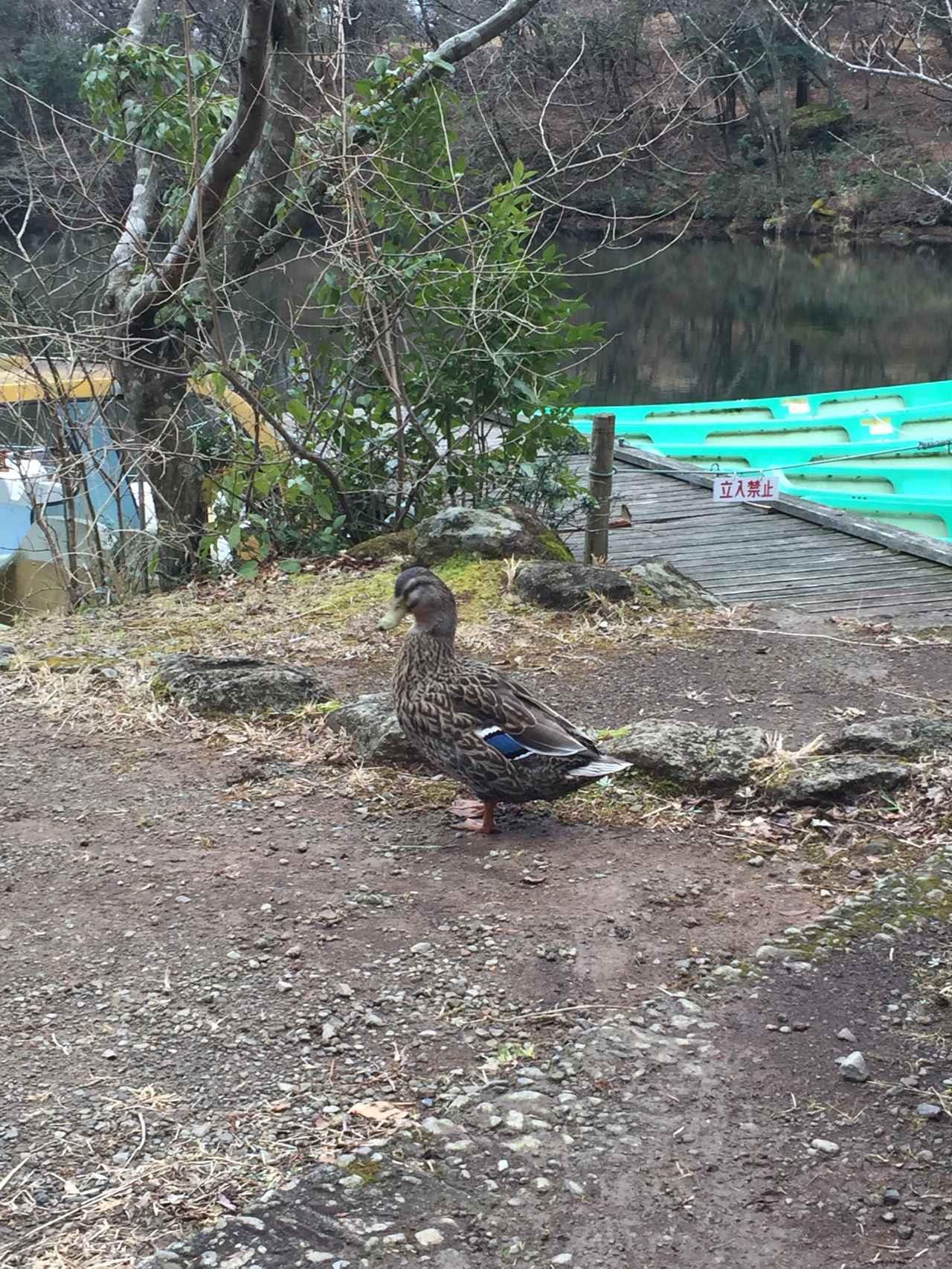 画像: 当日は休んでいる私達のそばに池の反対側からやってきてくれました!(スタッフ撮影)