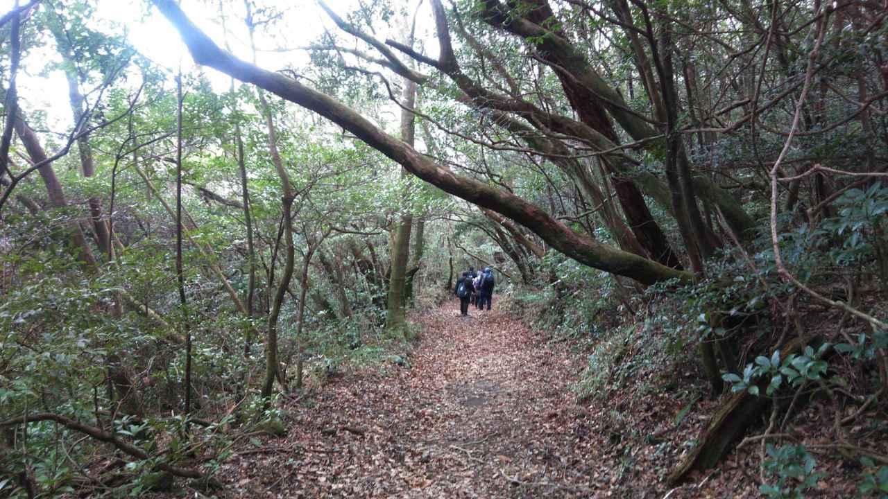 画像: 自然の中を歩きます(スタッフ撮影)