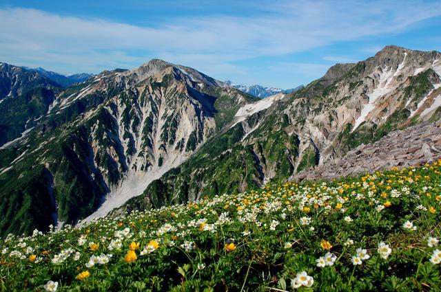 画像: 白馬三山とお花畑(イメージ)