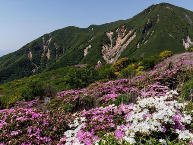 画像: <登山初級B>日本の百名山 九重山と星生山 まるで絨毯のようなミヤマキリシマ群落 日帰り【博多・基山PA 出発】|クラブツーリズム