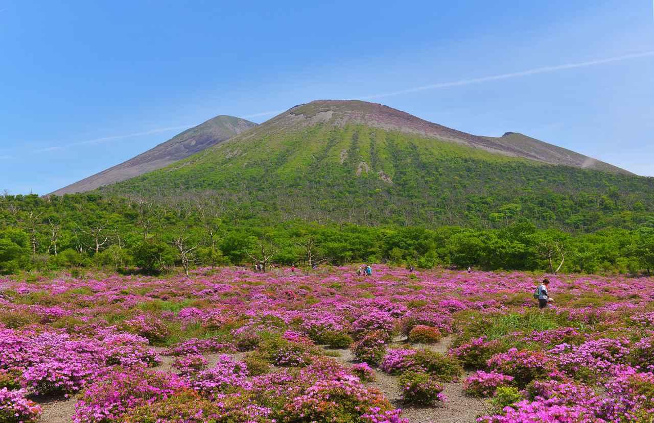 画像: ミヤマキリシマと霧島山(通常見頃は6月上旬/イメージ)