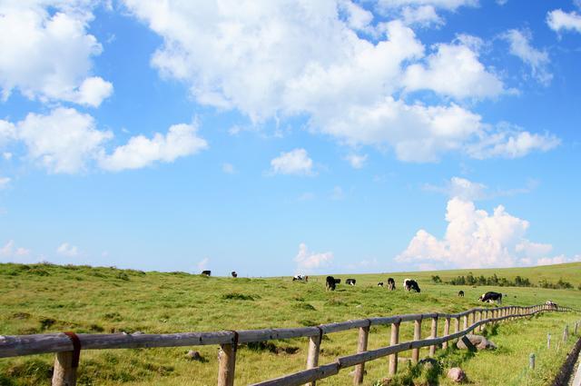 画像: のどかな放牧地(イメージ)