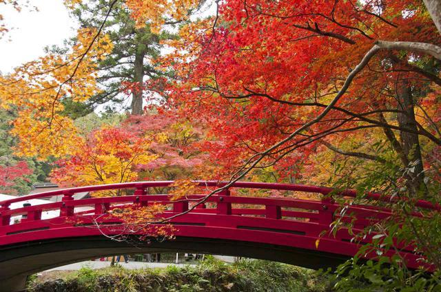 画像: 小國神社(静岡県)