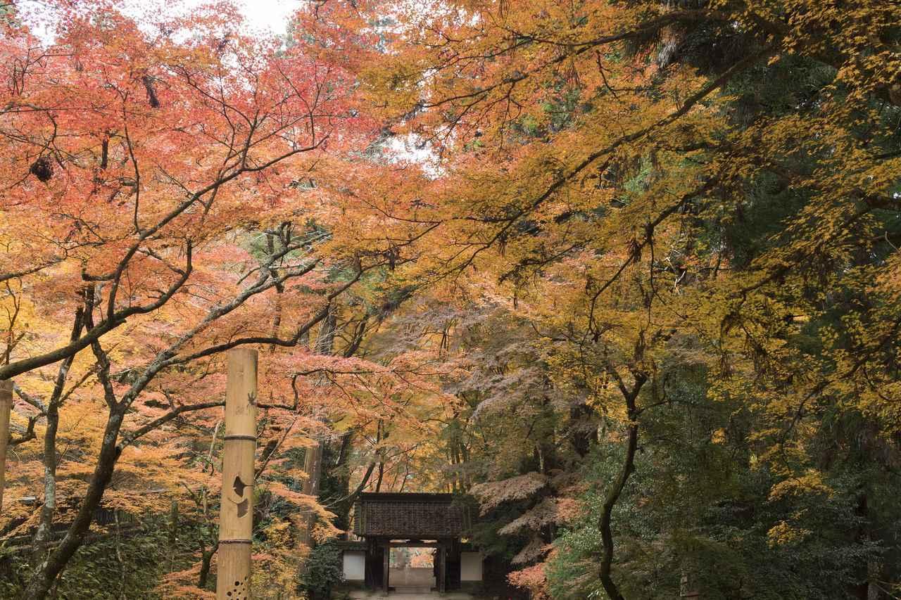 画像: 香積寺