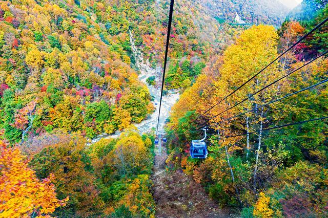 画像: なえばのドラゴンドラから眺める紅葉(例年三悪露は10月中旬~下旬)