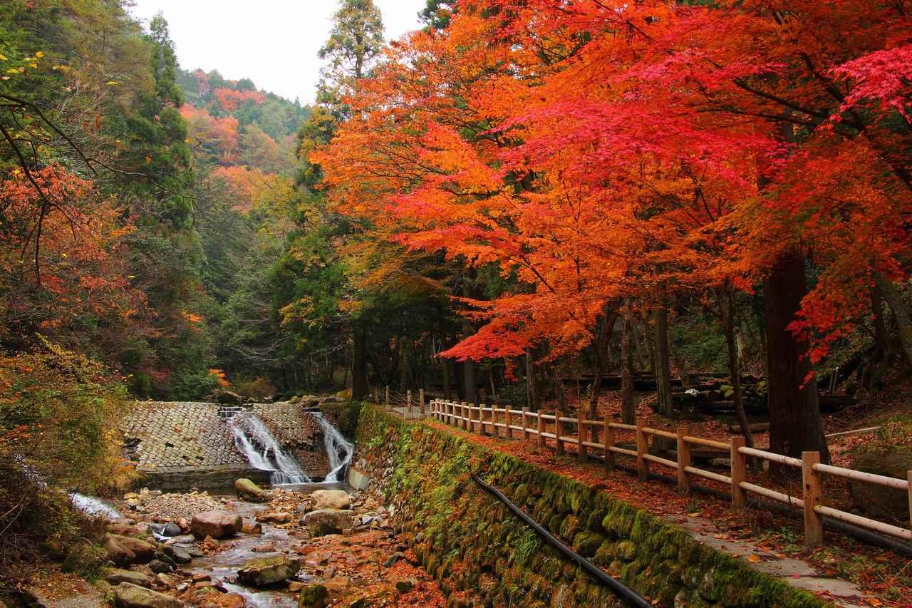 画像: 寂地峡の紅葉(例年見頃は10月下旬~11月上旬/イメージ)
