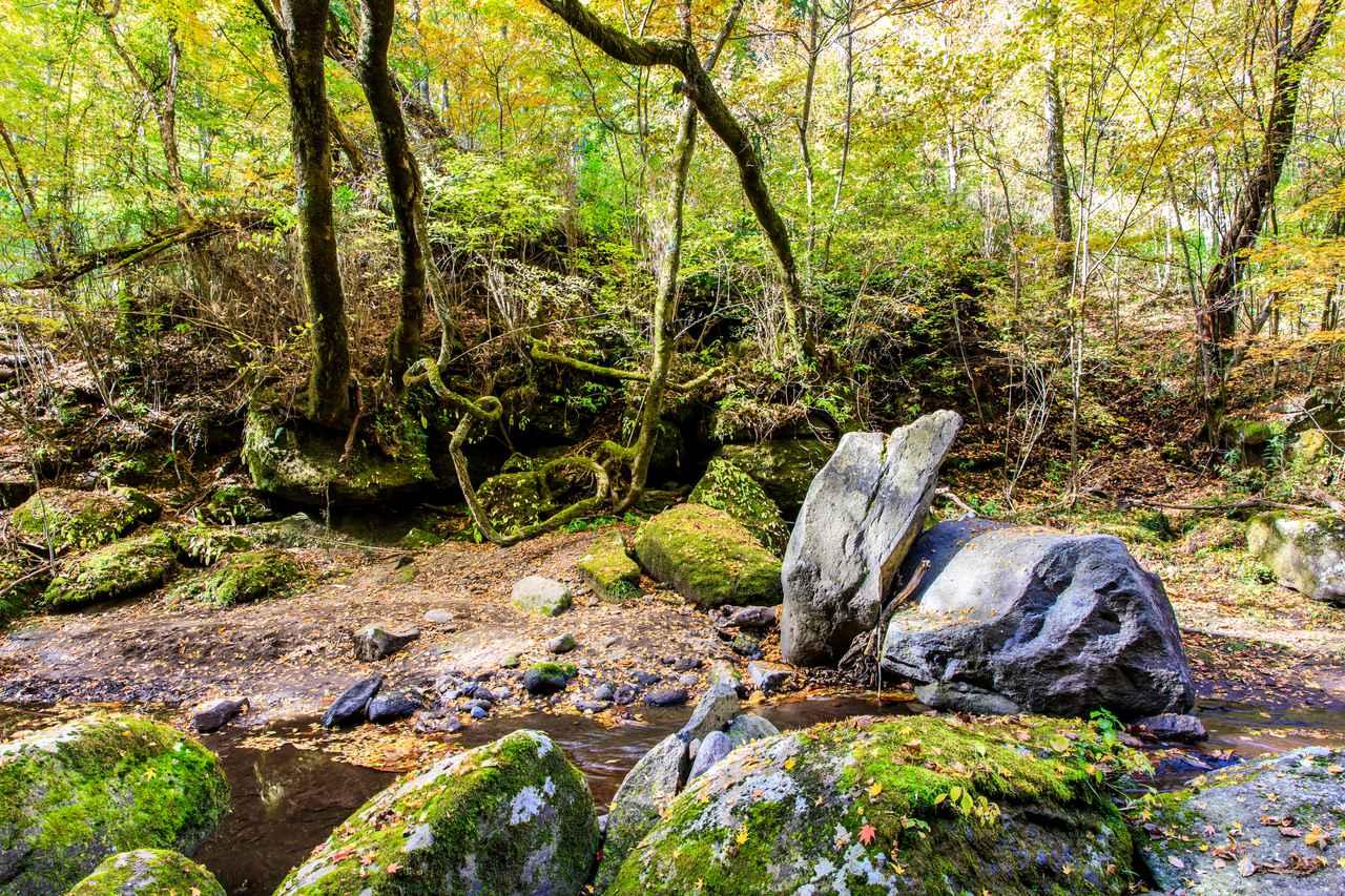 画像: マゼノ渓谷(イメージ/例年紅葉の見頃は11月上旬~下旬)