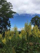 画像3: 【花めぐり】花旅コーディネーターからの花便り 真っ盛りの北海道ガーデン街道の旅 ツアー報告②