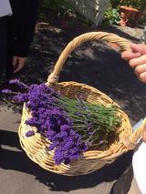画像4: 【花めぐり】花旅コーディネーターからの花便り 真っ盛りの北海道ガーデン街道の旅 ツアー報告②