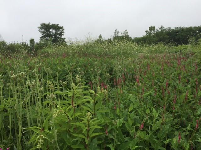 画像1: 3日目十勝千年の森と真鍋庭園と紫竹ガーデンガーデンを造る皆さんに会いに