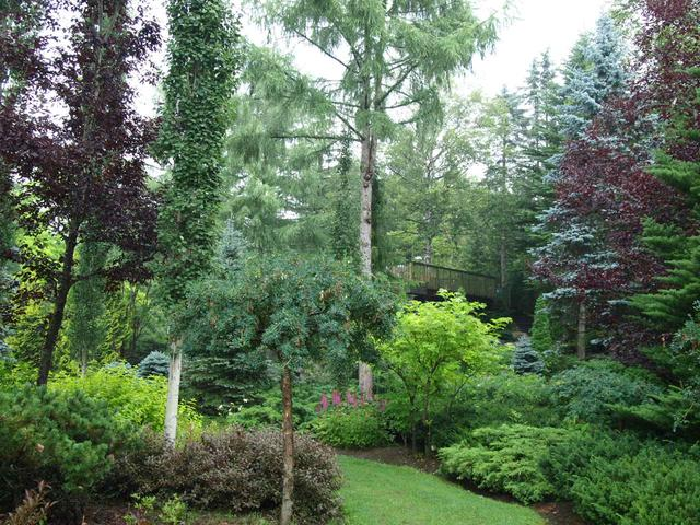 画像: 園内を歩いていると日本とは思えない高木の樹木が多く見られカナダかどこか?と思うほどです。