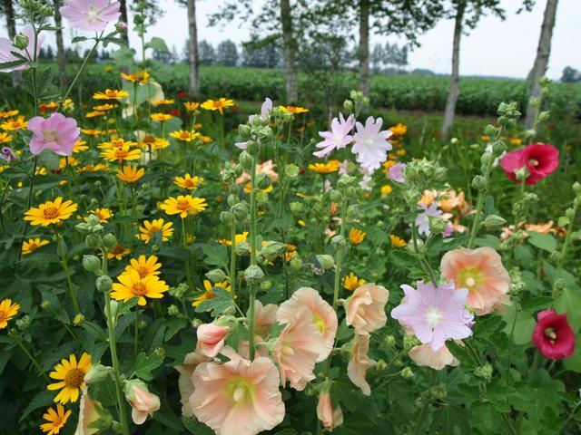 画像2: 3日目十勝千年の森と真鍋庭園と紫竹ガーデンガーデンを造る皆さんに会いに