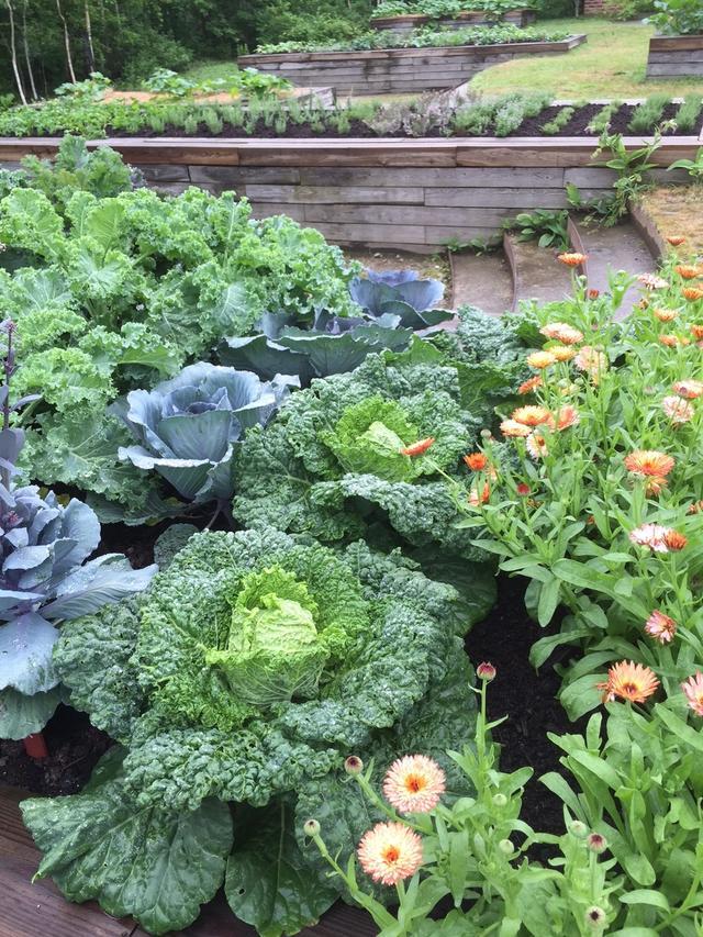 画像: みなさんのランチはこのキッチンガーデンの取立て野菜で