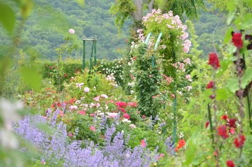 画像2: 写真提供:北川村 モネの庭マルモッタン