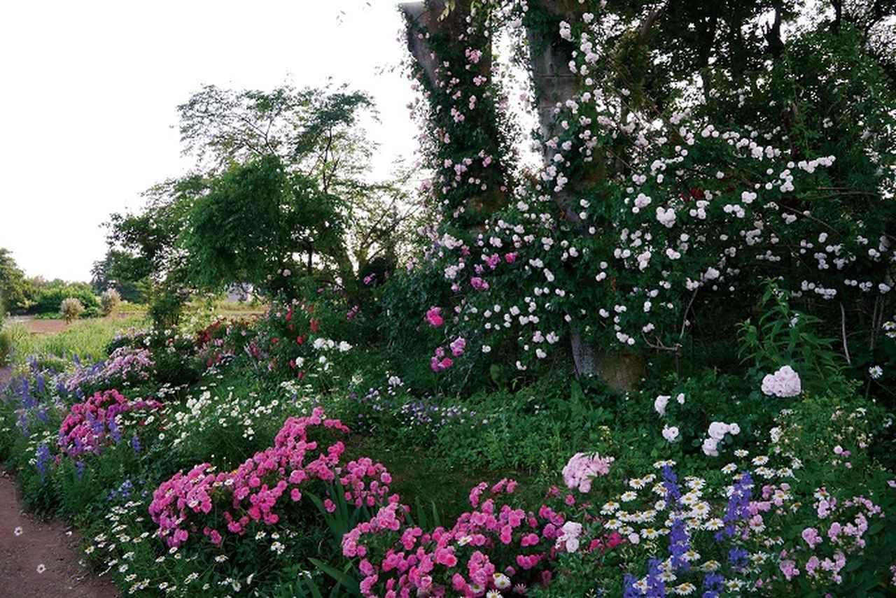 画像: The Natural Gardens of Sakano(坂野邸)