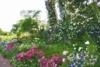 画像: <こだわりの花めぐりの旅>『バラ咲き誇る圧巻のプライベートガーデンへ 茨城 藤澤邸・坂野邸のバラの庭とアリスの茶屋のランチ』【新宿・上野発出発】5/18・26発|クラブツーリズム