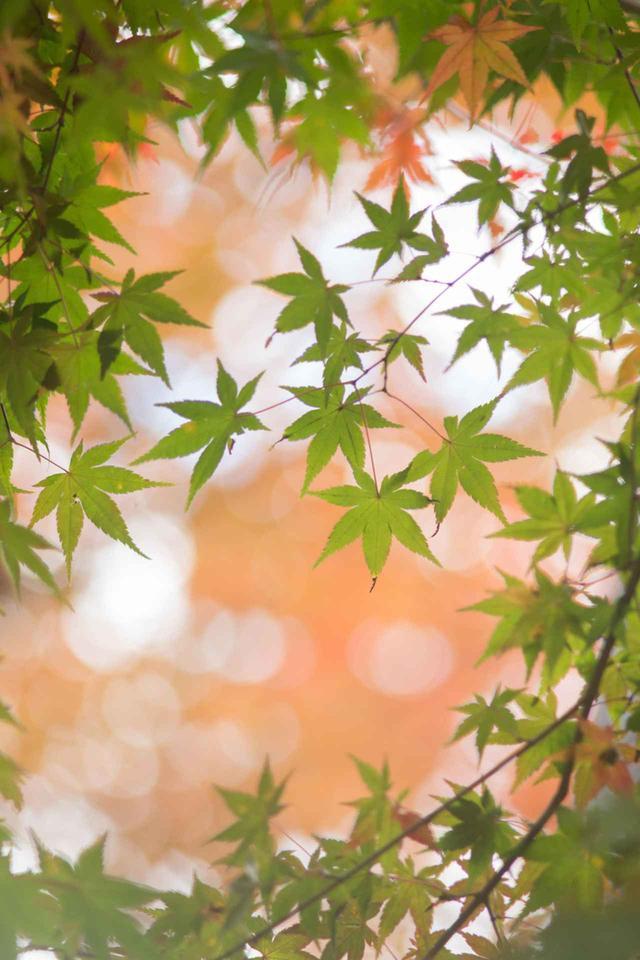 画像: 紅葉をワンポイントに(撮影/稲場啓太)