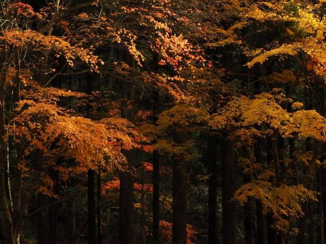 画像: 桐生川の紅葉(撮影/服部考規)