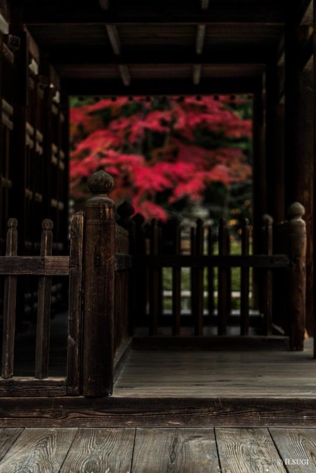 画像: ■出発日:11月27日 3日間 『「松花堂庭園」を早朝特別撮影!京都・奈良見頃の紅葉めぐり3日間』【東京出
