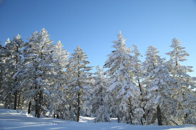画像: 志賀高原の樹氷(撮影/武藤裕也)