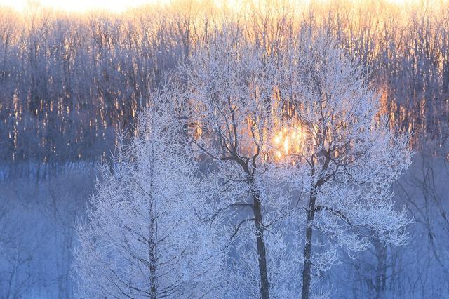 画像: 更別の霧氷(撮影/山本純一)
