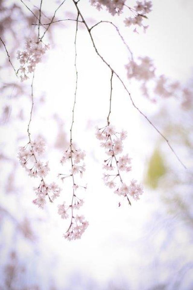 画像: 出発日:4月6日(土)