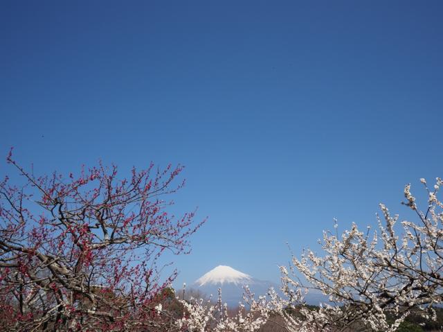 画像: 出発日:新宿/2月18日(月)・上野/2月20日(水)