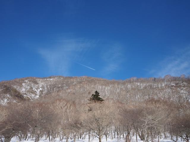 画像: 出発日:新宿/1月26日(土)・上野/1月27日(日)