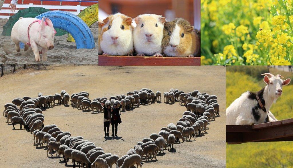 画像: 出発日:3月17日(日)1日限定特別企画 5名の写真家による5つの写真講座を開催!菜の花咲くマザー牧場