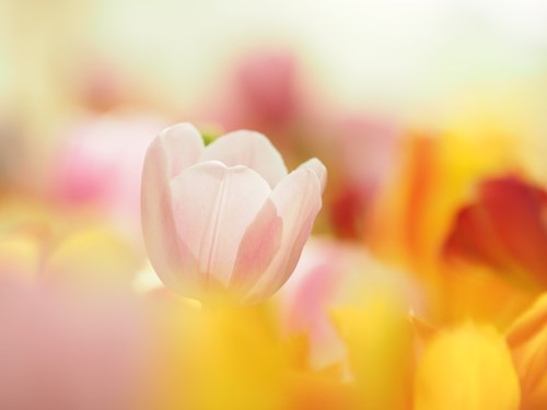 画像: 季節の花追い人シリーズ