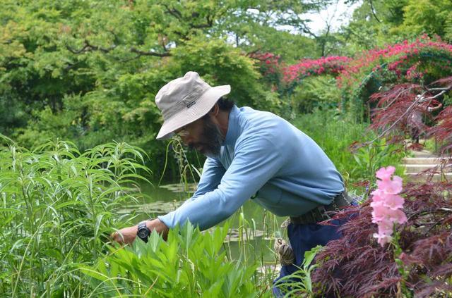 画像1: 川上さん「水の庭」手入れの様子
