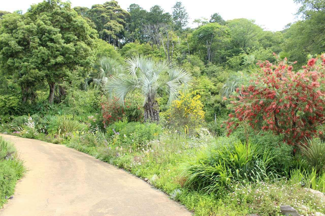 画像2: 園内にある3つの「庭」でモネの名作の風景に出会う