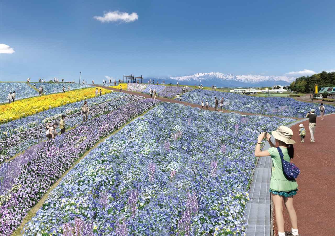画像: 信州花フェスタ 北アルプス花と丘(イメージ)