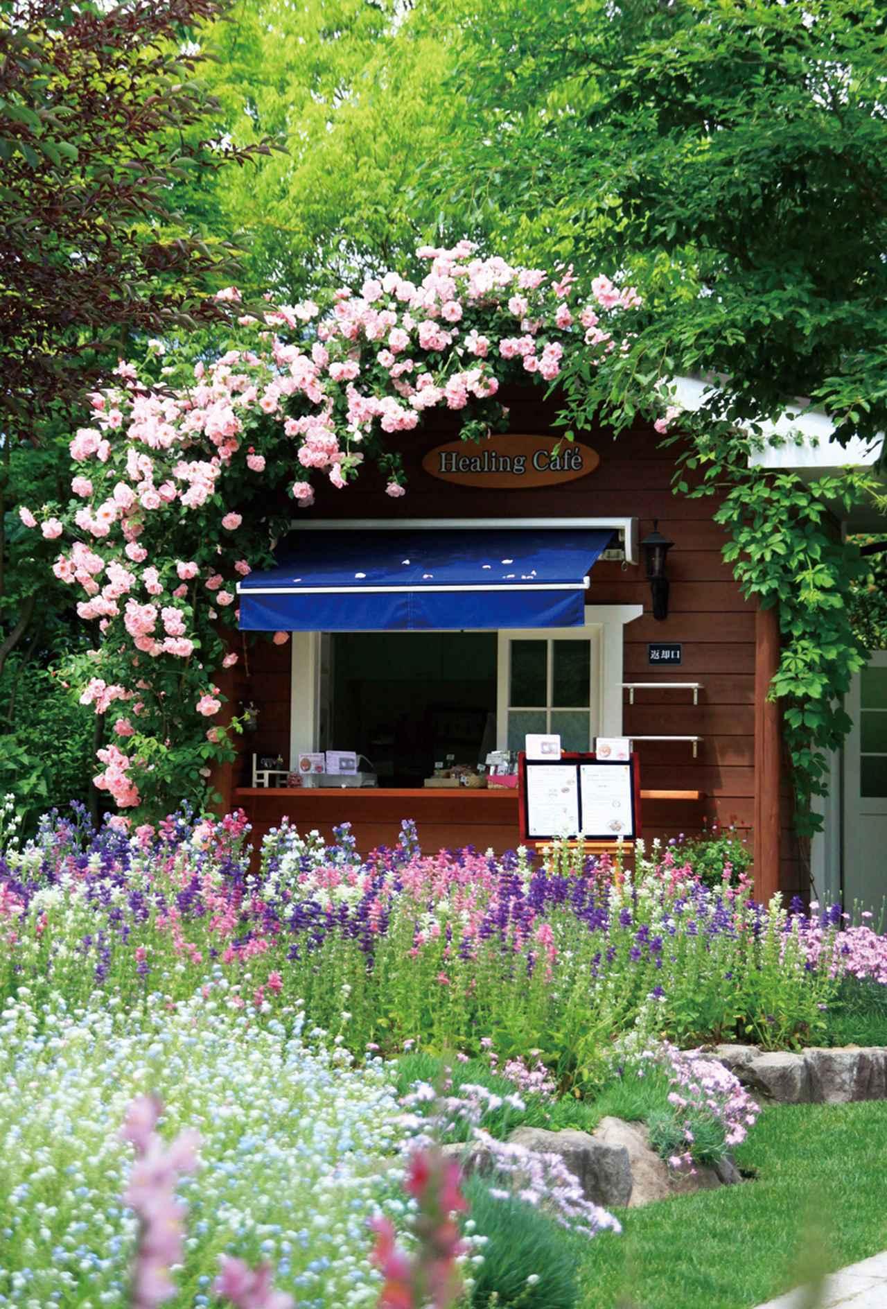 画像: ラ・カスタ ナチュラルヒーリングガーデン カフェ(イメージ/※花の見頃は5月~10月)